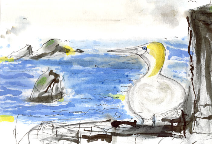 'Gannet's Eye View' by Andrew McNeillie